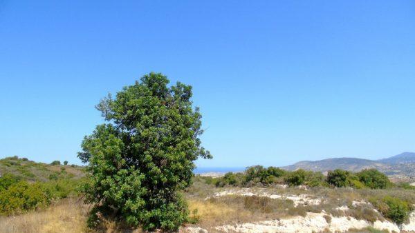 Земельный участок в Като Акурдалия
