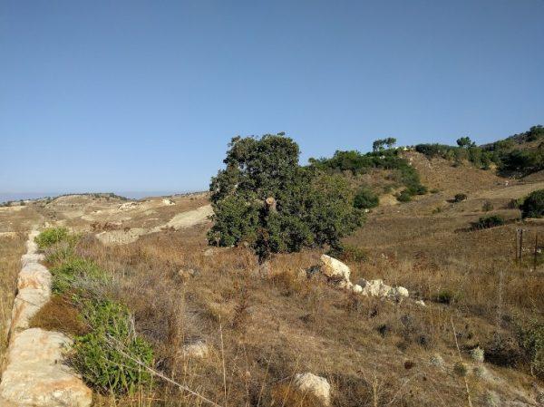 Купить земельный участок в Арму